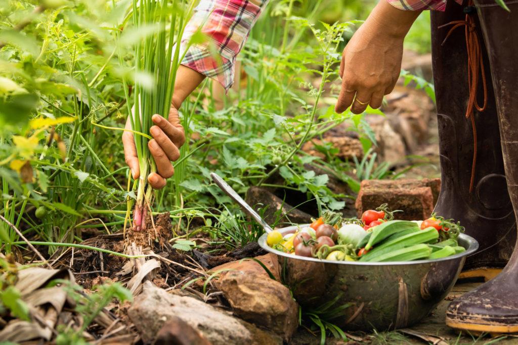 cultivos gastronomia sostenible